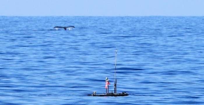 Europa, an autonomous wave-and-solar-powered robot, during its mission to search for humpback whales on the high seas of the Pacific Ocean.Jupiter Research Foundation