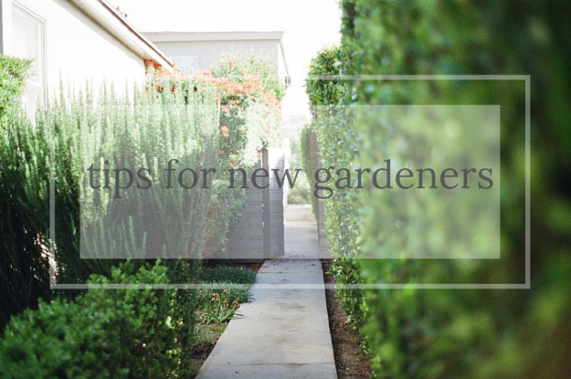 tips for new gardeners