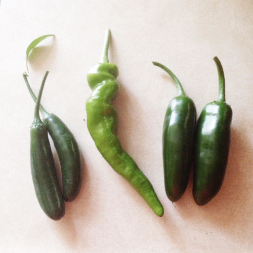 Peppers harvested from my garden!