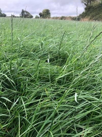 Grass Seed East Cork Watson Seed