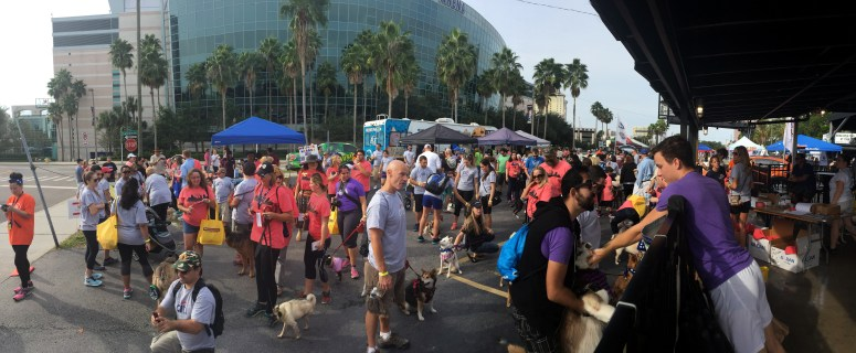 Animal Coalition of Tampa's Stride for Strays