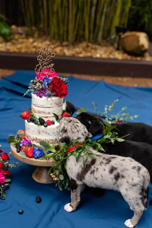 Boho chic dog wedding cake