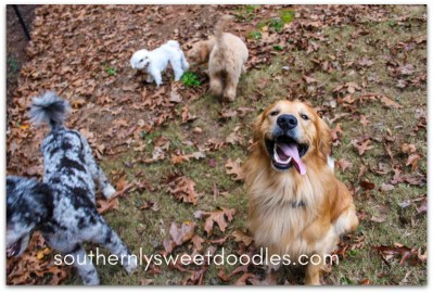 We tried to get a group picture with Mr. Lance in it, but he wanted to play fetch more....yes, he looks tired, right?