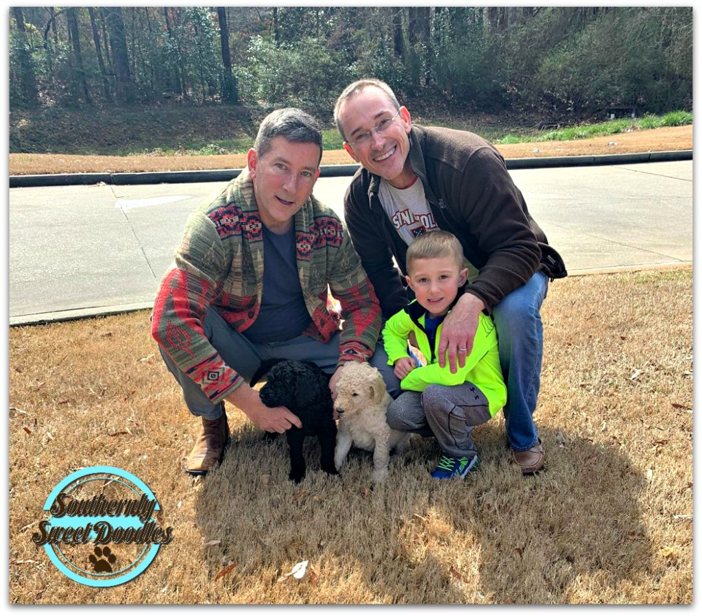 Southernly Sweet Doodles|High Quality Goldendoodle Breeder