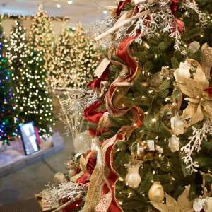 peppermint forest christmas shop is a beloved charlotte tradition partner - Peppermint Forest Christmas Shop