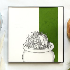 Original cactus illustration in pen with green gouache accents