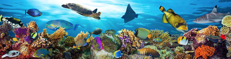 underwaterslider
