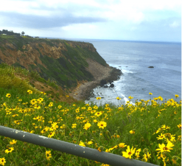 cliff, flowers, and ocean