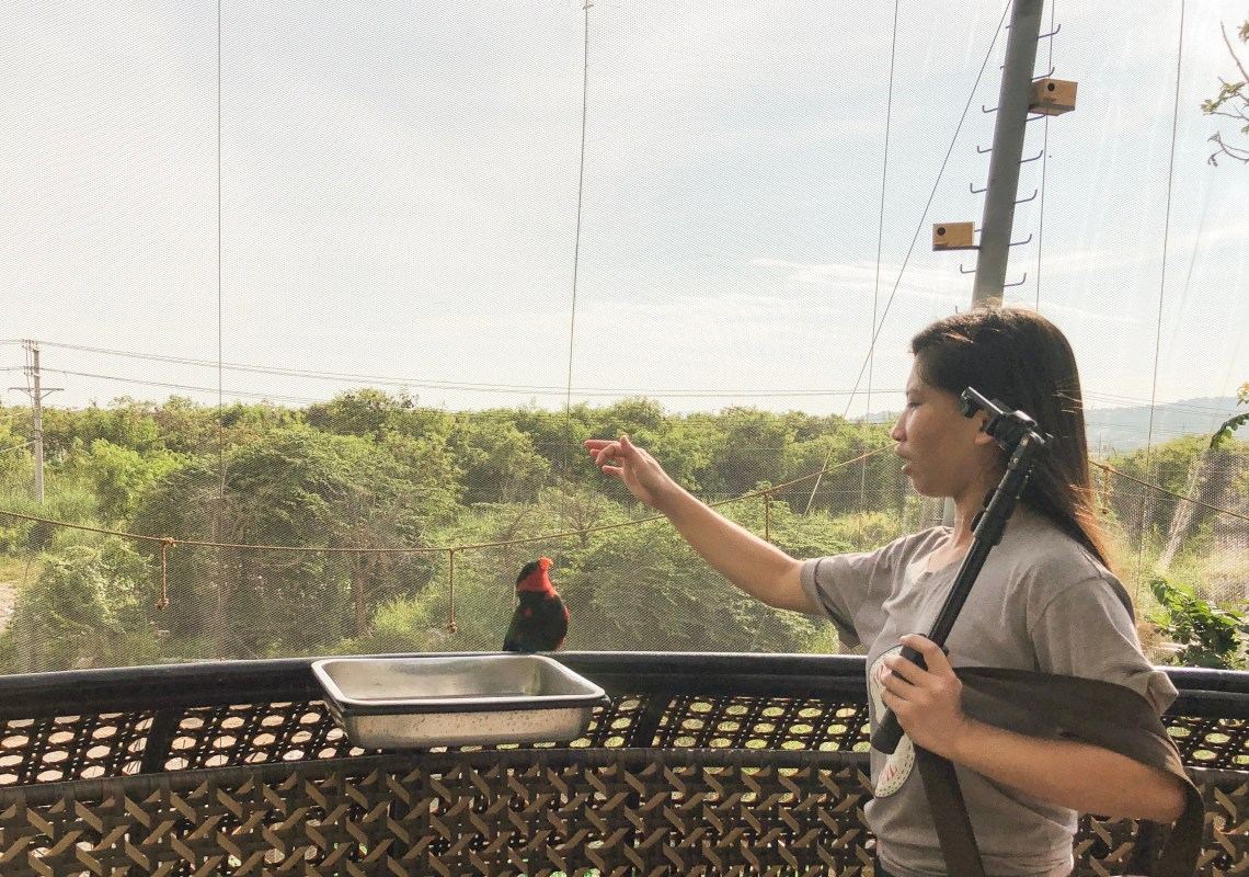 Bird interactions at Cebu Ocean Park