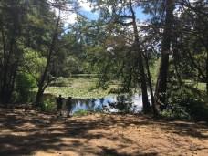 Bresemann Forest Parkland