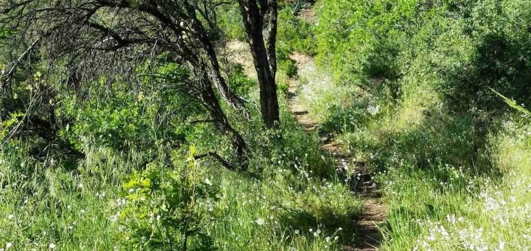 Trail Work Day – Oakley Trail  August 20, 2016 Sat 8am