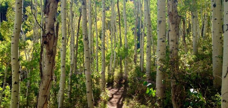 Franson Park Trail Project:  Picnic has been rescheduled to April 11, 6pm