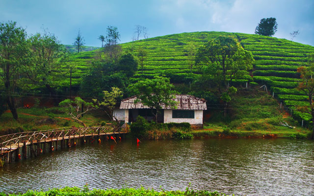 Vagamon Meadow Vagamon is a hill station located in Kottayam-Idukki border of Idukki district of Kerala, India.