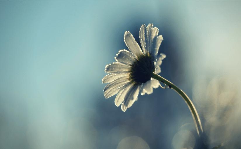single wildflower in the rubble
