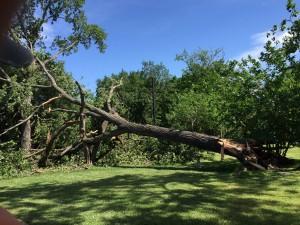 stormdamagecottonwood1