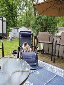 A Seasonals Dog Relaxing