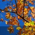 Soutron Autumn Newsletter