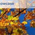 Library Management Showcase London