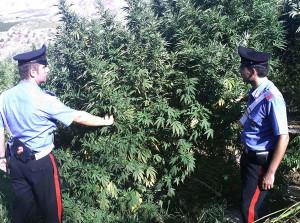 droga-palti-reggio-carabinieri
