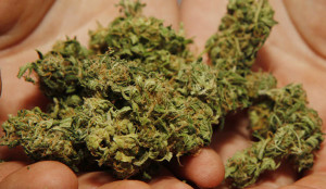 marijuana6b