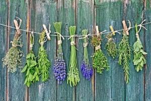 Pasquetta dedicata al riconoscimento delle erbe spontanee nutrizionali e curative