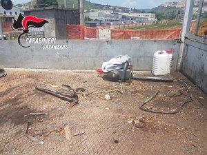 Sorpresi a rubare legna in un cantiere, due arresti