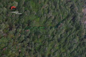 """Operazione """"Green Mountain"""" dei Carabinieri, scoperte 4mila piante di canapa indiana"""