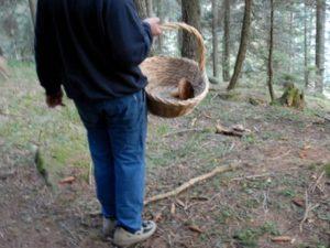 Va a cercare funghi tra Brognaturo e Cardinale e sparisce nel nulla, ricerche in corso per un 65enne
