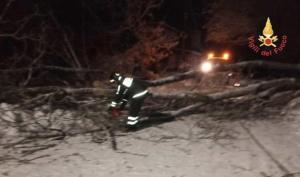 Maltempo – Dopo nevicata alberi tranciano cavi rete Enel nel catanzarese
