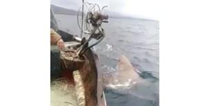 VIDEO | Salva lo squalo a mani nude dopo che gli aveva distrutto la rete