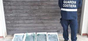 Sequestrati dall'Ufficio Circondariale Marittimo di Soverato 20 kg di novellame e sanzione di 5000 euro