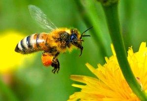 SOS miele: sofferenza api e cambiamenti climatici causano bassa produzione miele. Fare attenzione all'indicazione di origine