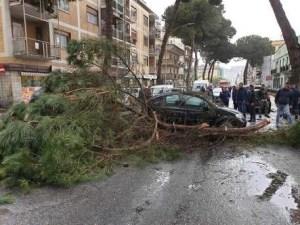 Tragedia sfiorata, grosso ramo cade su auto. Illesa una donna
