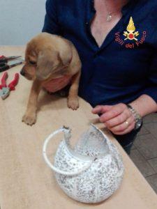 Cucciolo di cane infila la testa all'interno di un paralume, soccorso dai VdF