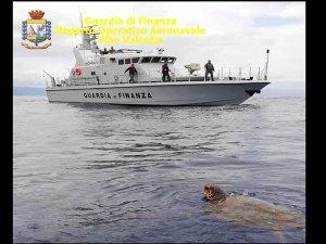 Tartaruga in difficoltà soccorsa dalla Finanza, sarà curata a Montepaone