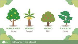 L'impegno per la sostenibilità da parte di Cataprint con Treedom