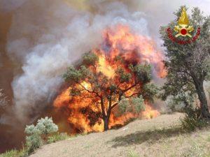 Catanzaro – Incendio nei pressi del Parco della Biodiversità Mediterranea