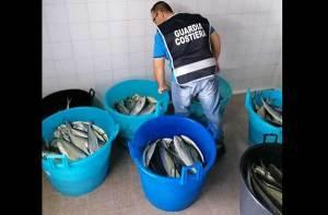 Pesca di frodo, sequestrati settecento chilogrammi di prodotto ittico