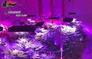 Trasforma appartamento in una serra per coltivare marijuana, 25enne arrestato
