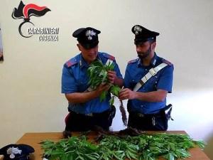 Cannabis nel giardino di casa, 55enne denunciato