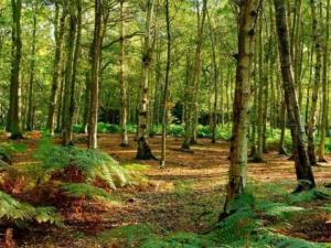 """Forestazione, Gallo: """"11,5 milioni per la tutela del patrimonio naturale calabrese"""""""