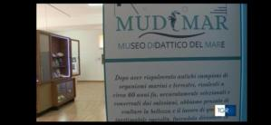 Nasce a Soverato il MUDIMAR, Museo Didattico del Mare. Inaugurazione il 3 Luglio 2020