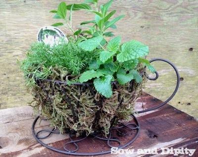 A Cup of Tea Planter