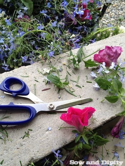 reviving hanging baskets (3)