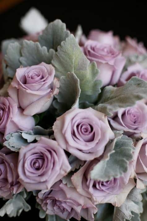 صور اجمل الورود فى العالم متنوعة