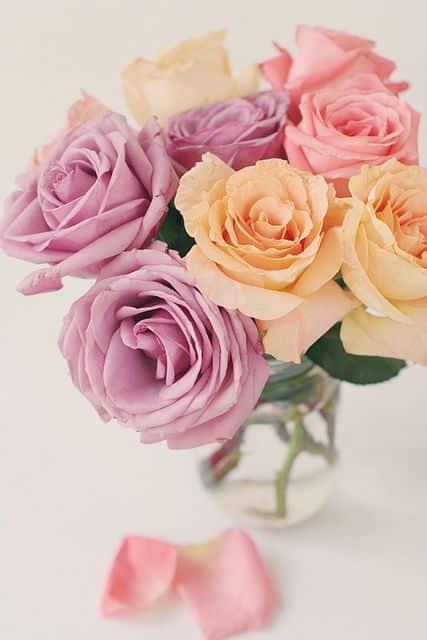 صور اجمل الورود فى العالم حلوة