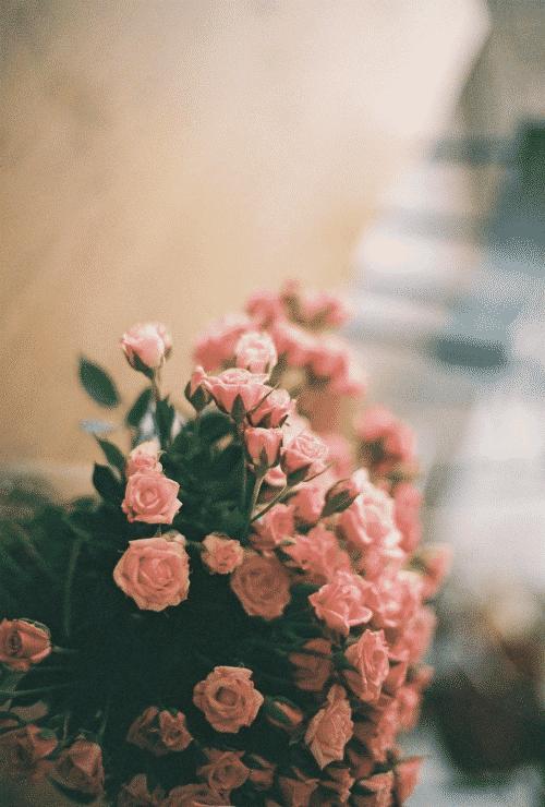 احلى صور ورد جميل