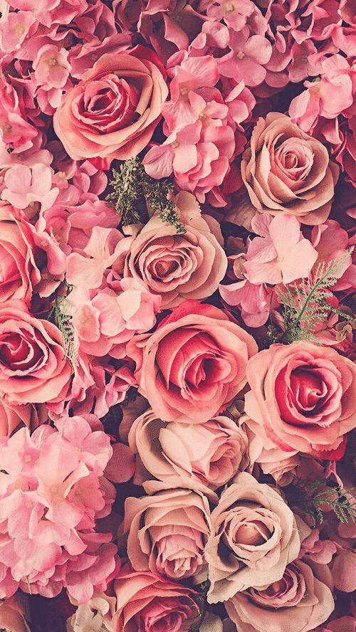 صور جميله ورد جميل