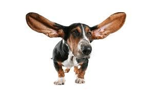 blog dog ears