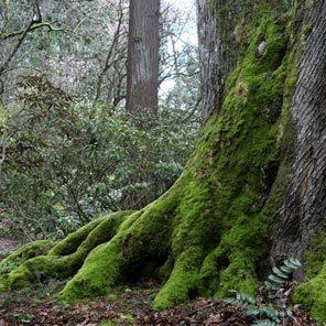 Beautiful moss weather we're having